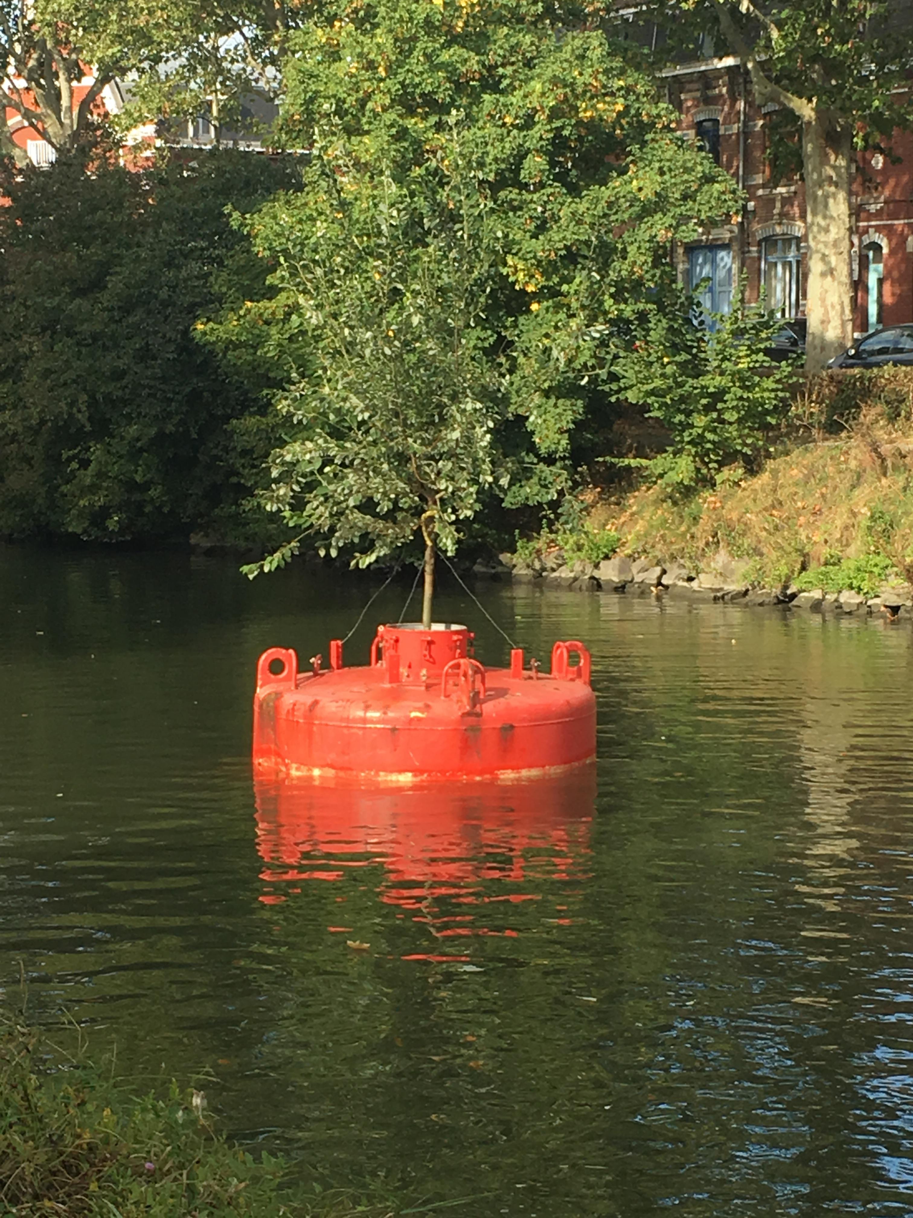 Forêt flottante